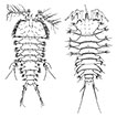 Phylogeny of the taxon <i>Paralaophontodes</i> Lang (Copepoda, Harpacticoida, Laophontodinae), including species descriptions, chorological remarks, and a key to species