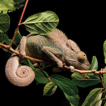 Uncovering the herpetological diversity ...