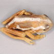 A type catalogue of the reed frogs (Amphibia, ...