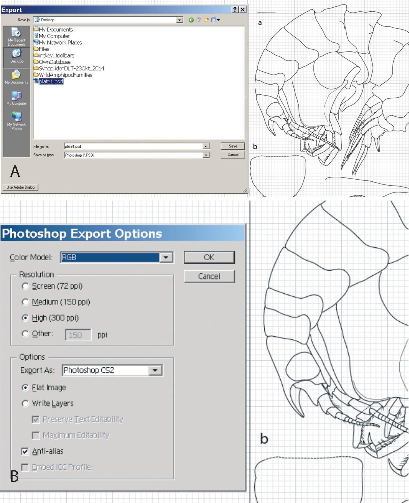 Shadings in digital taxonomic drawings